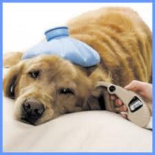Pet Insurance Coverage's Company logo